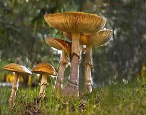 Mushroom-2012
