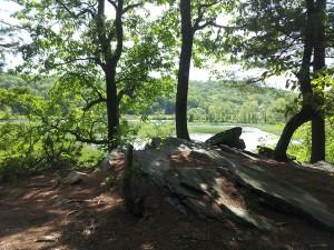 SElden Creek Preserve