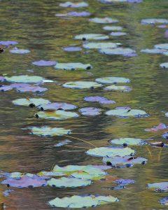 Pat Duncan HM Landscapes