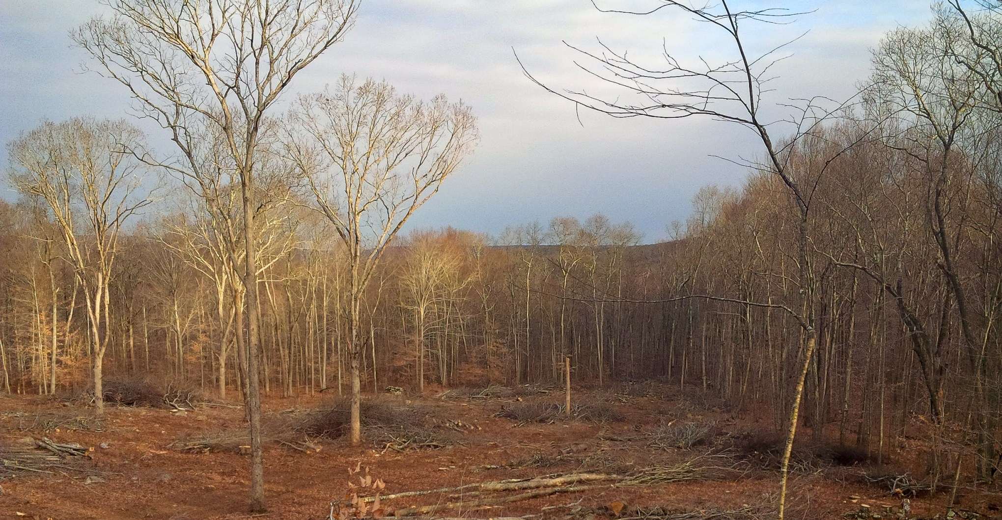 Young Forest Habitat Initiative Brings Balance to Lyme Woodland